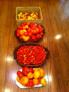 Tomatoes crop 2011
