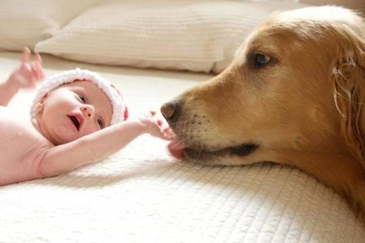 Dog pic dog licking newborn