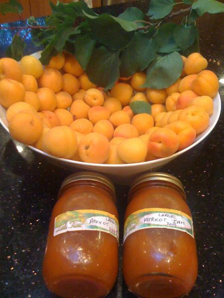Apricot Jam plus fresh fruit