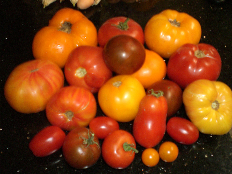 Differentvarietiesoftomatoes