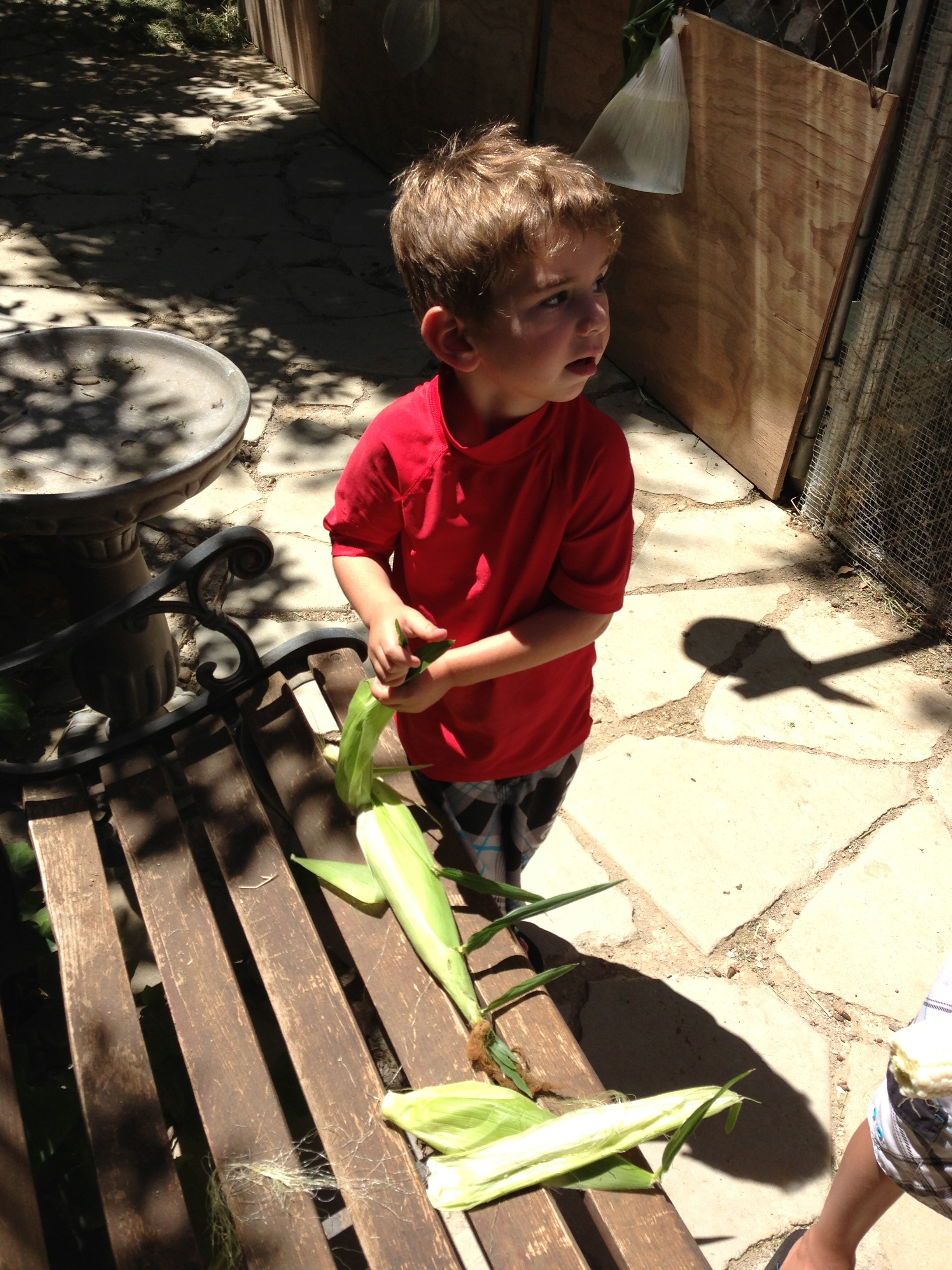 Jonah shucking corn sept 2013