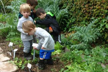 Jack Jonah Noah Gabe in veg patch eating fresh veggies