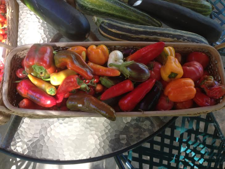 Little Farm peppers and eggplant 2014