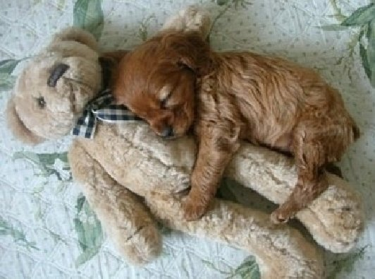 dog hugging toy