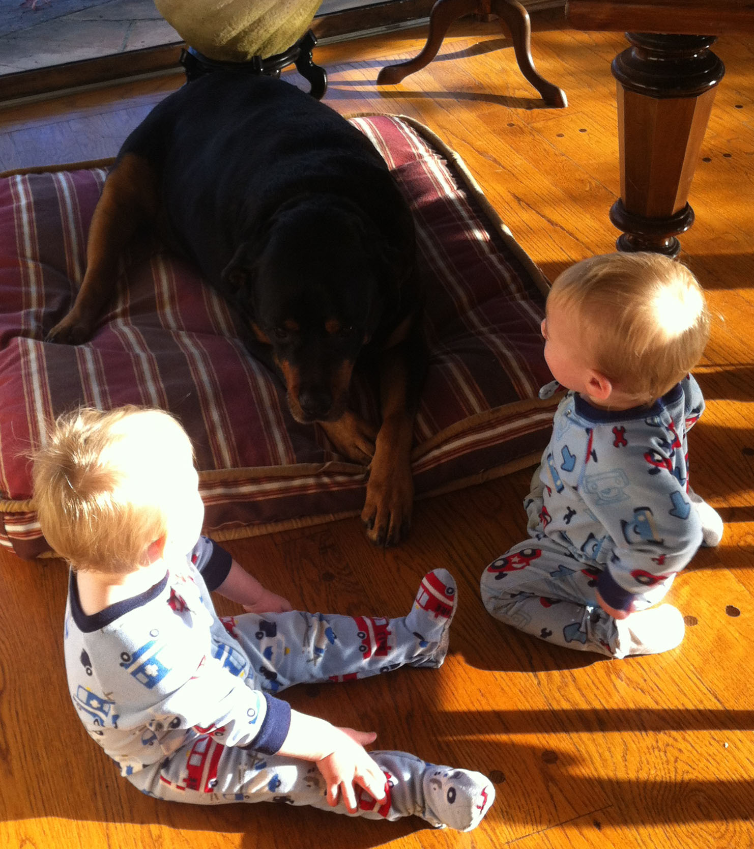 Noah Gabe and Sunny Dog Dec 2012