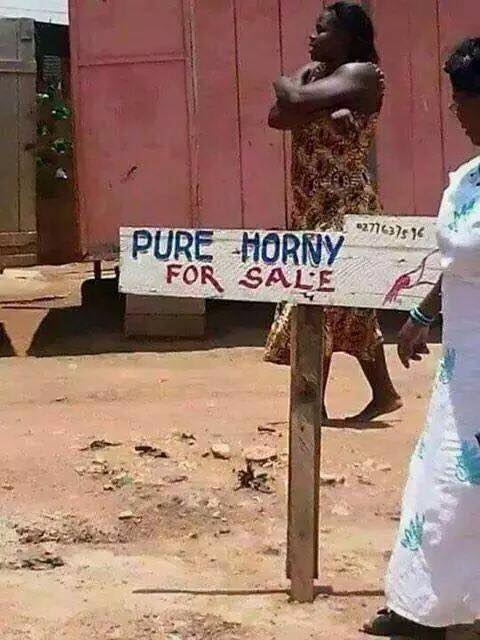 Pure horney for sale