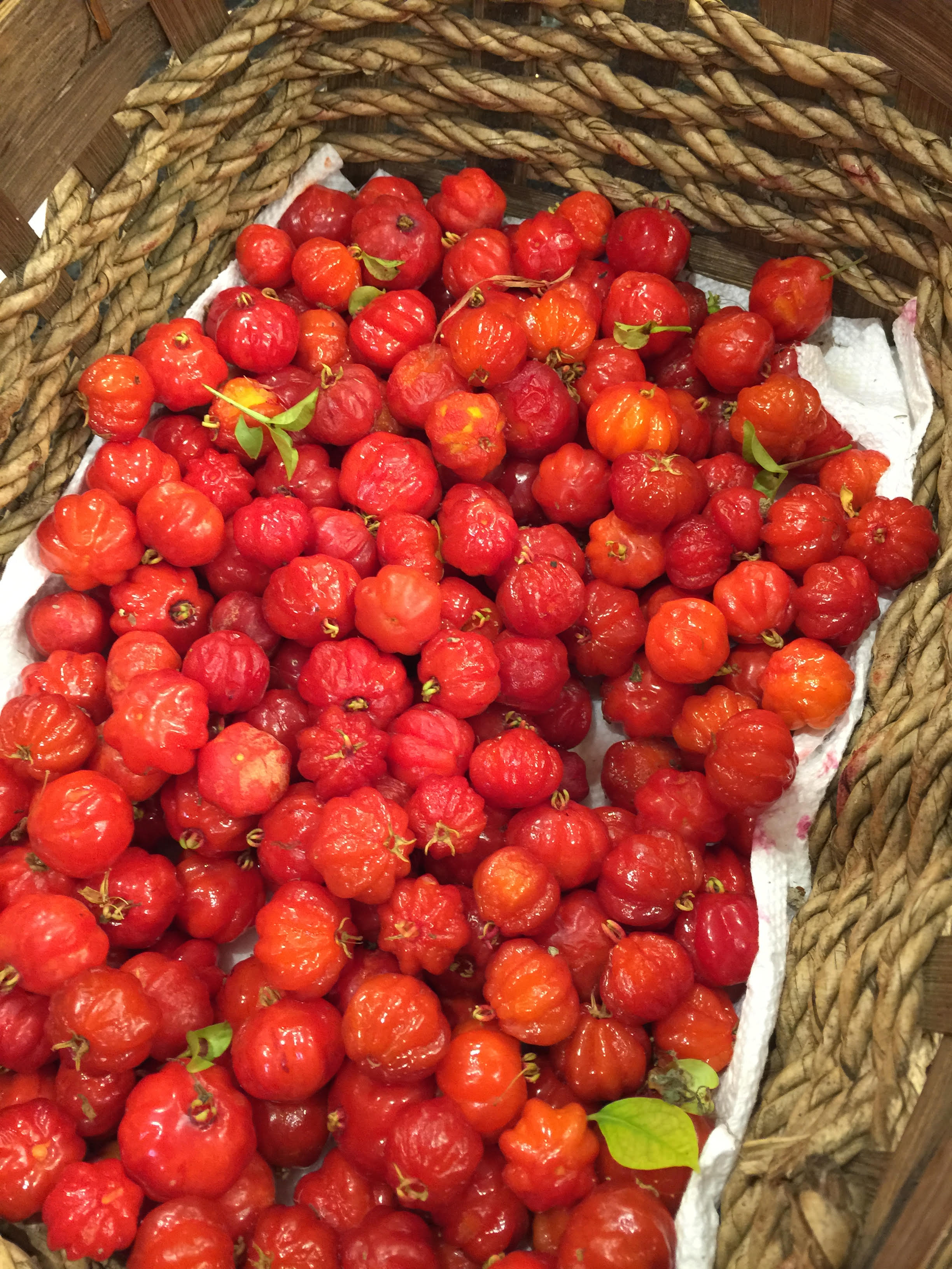 Surinam Cherries of little farm