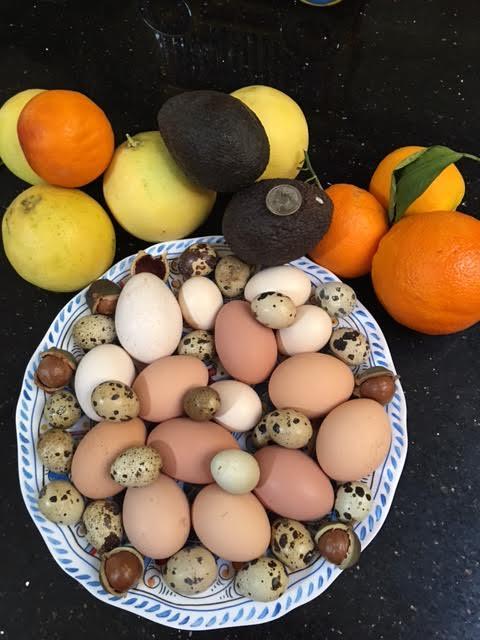 little-farm-bounty-eggs-nuts-avocado-navel-orange-blood-orange-palestinian-lime-valencia-2016